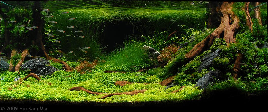AQUARISMO DE AGUA DOCE Reefsimples - Blog de aquarismo do Roberto ...