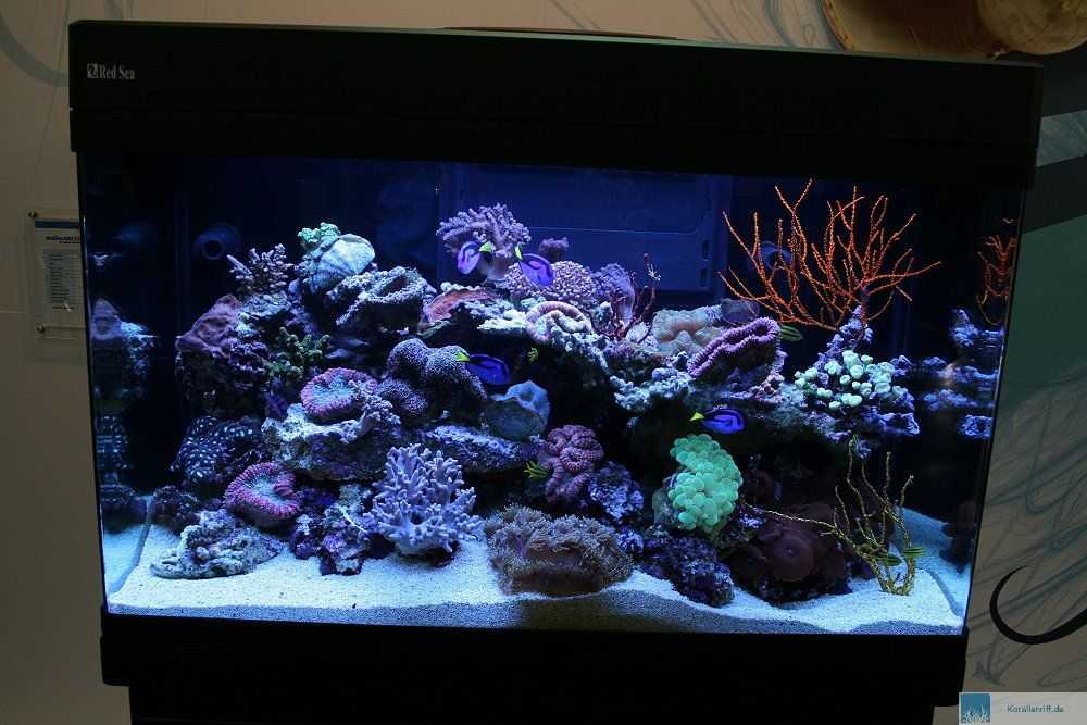 red sea max 250 liter 65 gallons all in one tanks. Black Bedroom Furniture Sets. Home Design Ideas