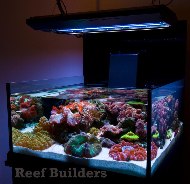 Neo nano from deepsea aquatics introduces some welcome for Construction aquarium