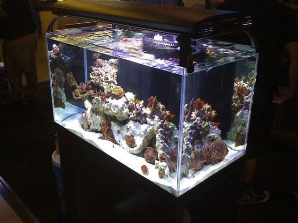 oceanic illuminata 57 gallon the planted tank forum