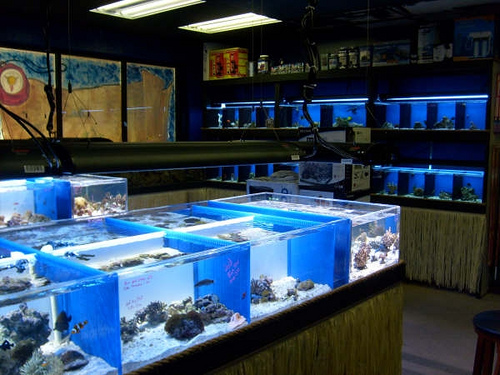 reef builders the reef aquarium blog part 1 fish store 500x375