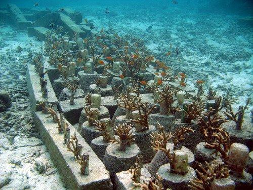 recifes de corais da indon201sia reefsimples blog de